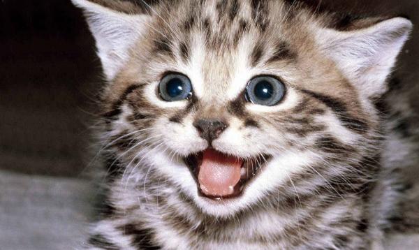 Kittens in Blog Titles = Gold